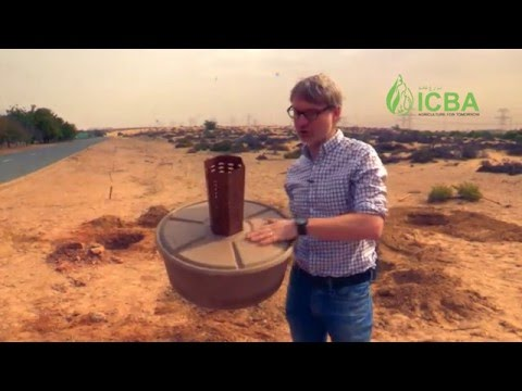 Cocoon planting technology in UAE