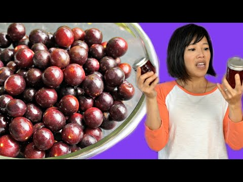 MUSCADINE Taste Test & How to Make & Can Jelly | Fruity Fruits
