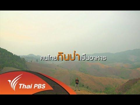สามัญชนคนไทย : คนไทยกินป่าเป็นอาหาร (30 พ.ค. 58)