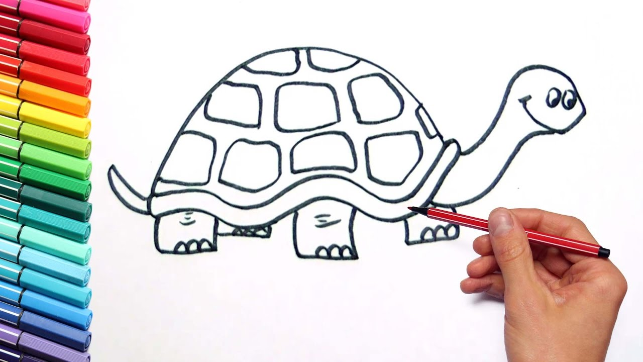 drawing turtle color page how to draw animals with stikers and