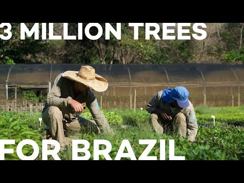 3 Million Trees For Brazil