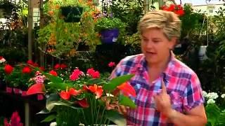 Gardening Tips with Tanya Visser -  Indoor Plants