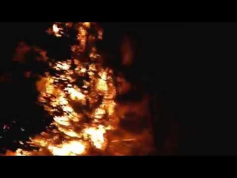 Crazy Man Sets Tree on Fire with Firework