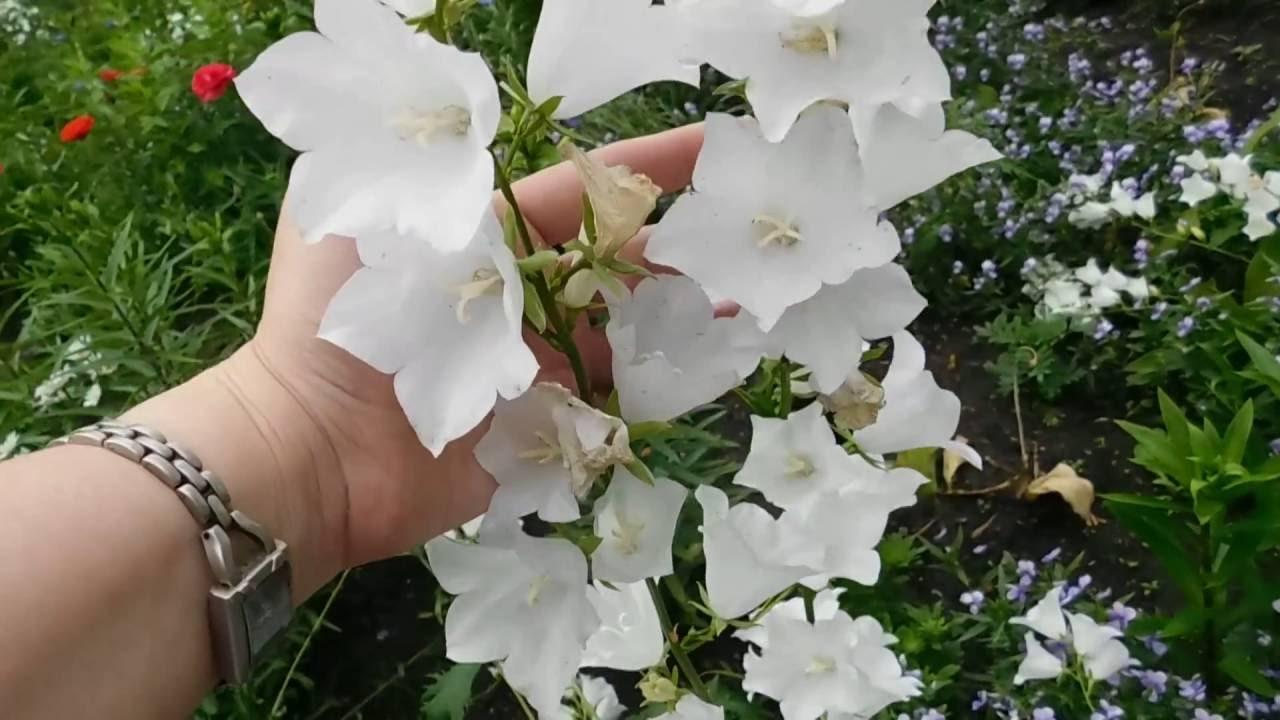 Купить вышивка бисером белая герань (вб1017) 255,45 грн в интернет магазине тм идейка. Вышивка бисером, наборы для вышивки бисером,