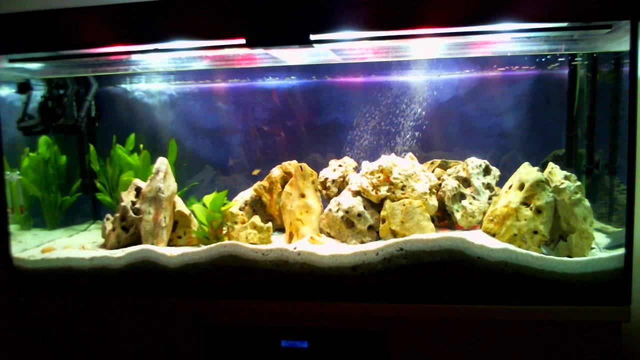 600liter aquarium youtube. Black Bedroom Furniture Sets. Home Design Ideas
