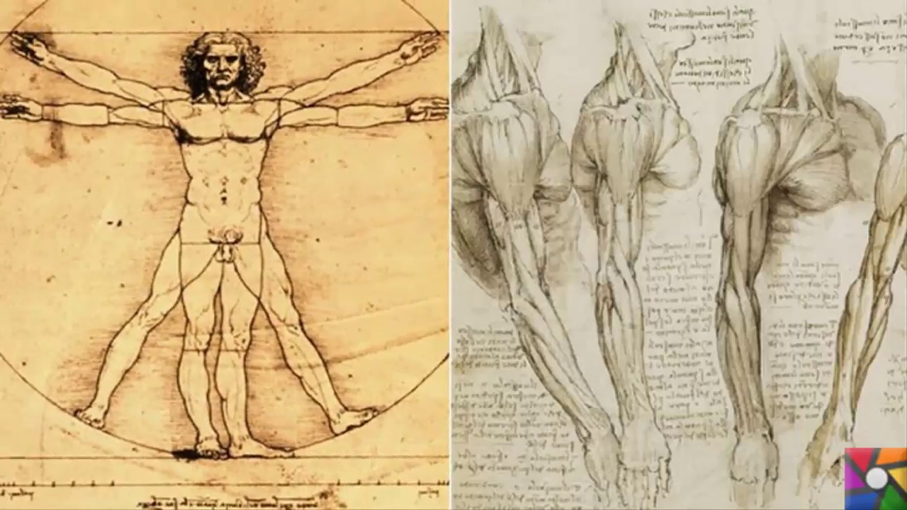 renaissance science drawings - 768×480