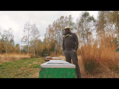 Albinele în Octombrie 2019. Este Octombrie și Continuăm Tratamentul Pentru Varroa
