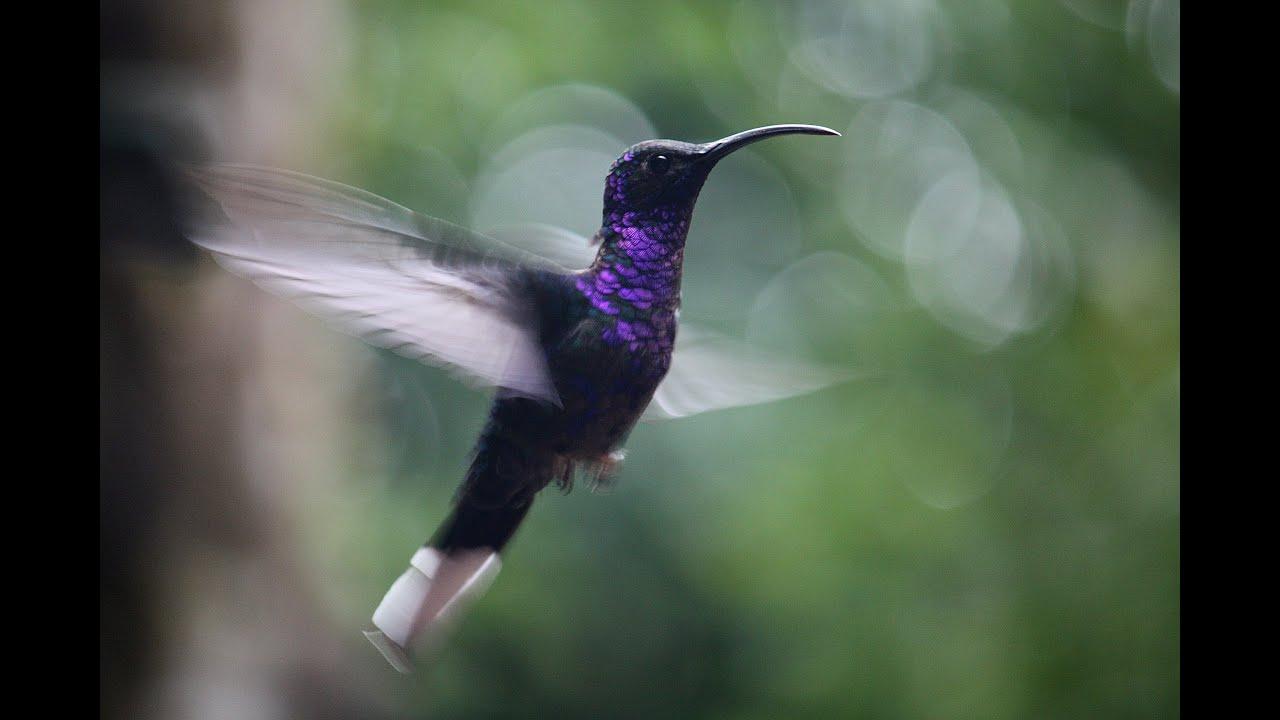 Monteverde Hummingbird Garden, Costa Rica
