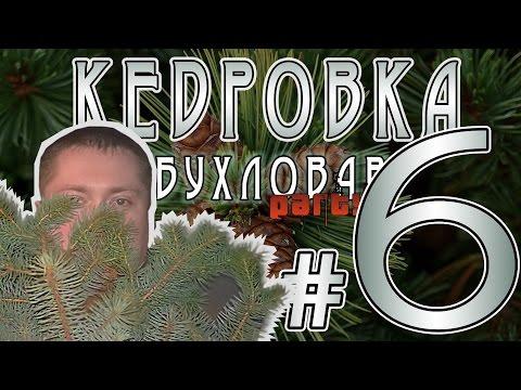 Купить кедровые орехи оптом, цена в Екатеринбурге