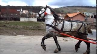caii ghiuri rupea