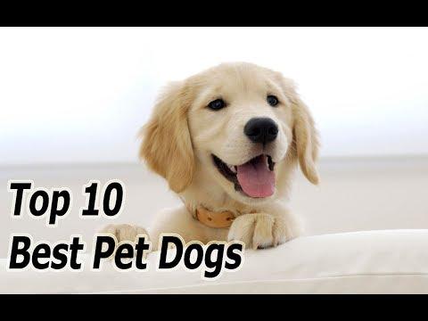 top-10-best-pet-dogs
