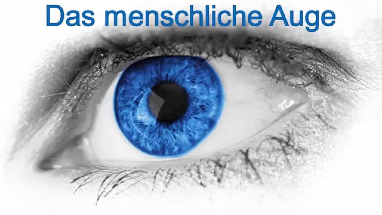 Aufbau Auge Arbeitsblatt Grundschule : Der aufbau des auges youtube