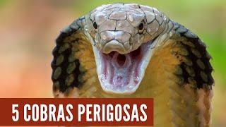As 5 Serpentes mais perigosas do mundo