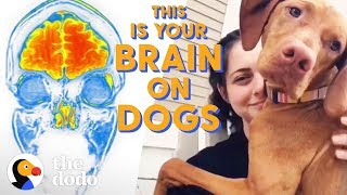 What Happens To Your Brain When You Pet a Dog? | The Dodo