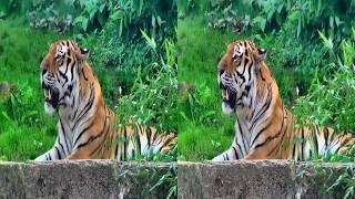 3D video - Erlebnis Zoo Hannover - ( 4K 3D SBS VR TV )