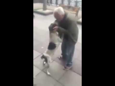 Фантастическая встреча пса, после трех летной разлуки, с хозяином