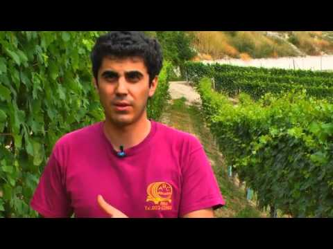 JAMESSUCKLING.COM - Barolo - Bruno Giacosa - The Falletto Vineyard