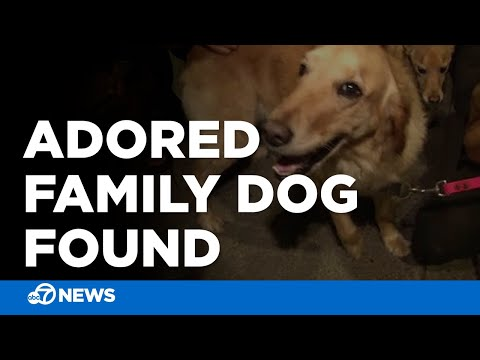 Golden retriever reunited with family after being stolen