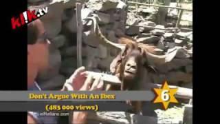 Top 10 Viral Videos - 22nd Jul 2010