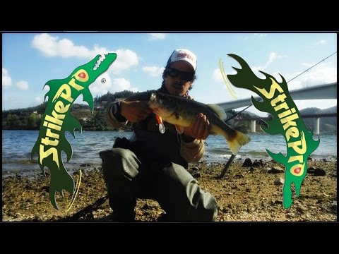 Portugal - Rio Douro - Pesca ao Achigã - Bass Fishing