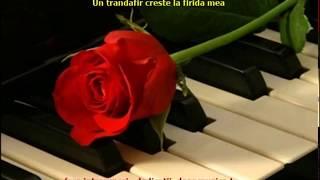 Un trandafir creste la firida mea Machedoneasca