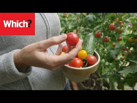 Vegetable gardening jobs for August - Which? Gardening