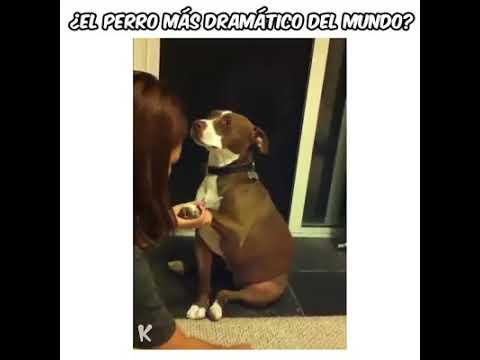 El Perro Más Dramático Del Mundo