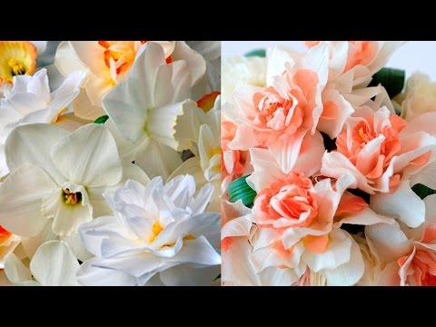 Нарциссы Махровые   Double Narcissus