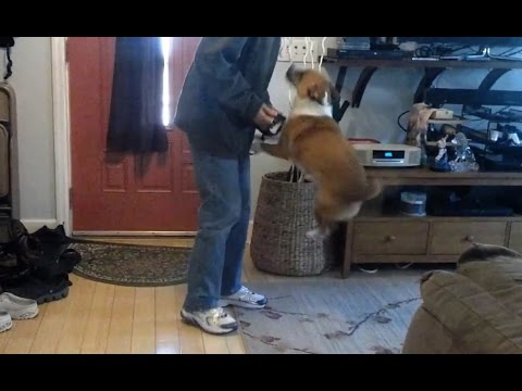 Dogs Excited to go for a Walk Compilation