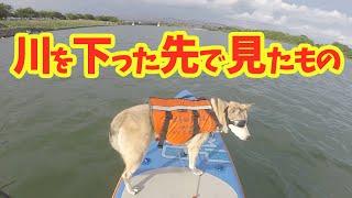 【わんこと川下り】むぎと日帰りダウンリバー〜木曽川編〜