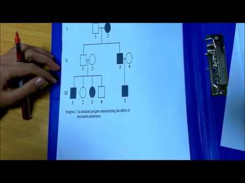 Module 03 - Pactical Genetics - Ahmed Nawar