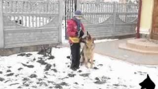 Занятие по послушанию (дрессировка собаки, Черновцы)
