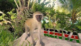 KENYA,SWAHILI BEACH, 4K, DIANI, MAVIC Pro, Drone footage from holiday in paradise