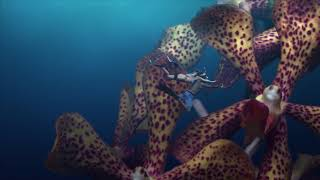 Dream In Cayman - Flower Divers