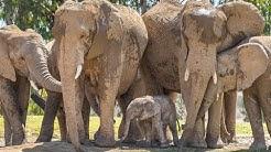 Elephant Cam Live