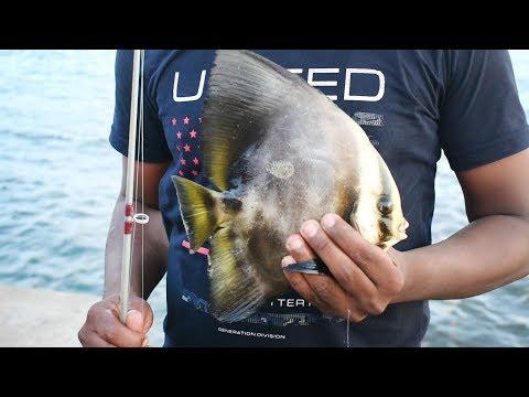 #Chennai#ennore#rock#fishing. Fish Hunting  Kasimedu N4 Beach #hook Stars