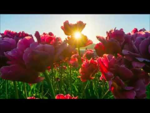 In-Depth Study of Surah Ar-Rahman Session 1    Part 3