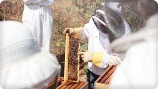 Michael Bush On The Joy Of Beekeeping - Honeylove