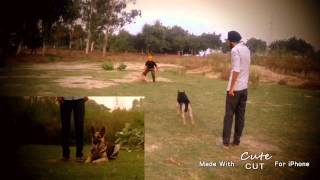 Dog Training, Attack On Command, Cleaning Home, Punjab