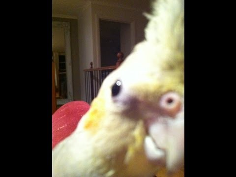 Bird singing dubstep! (ORIGINAL)
