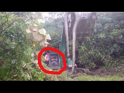 18 Unusual Jungle Discoveries