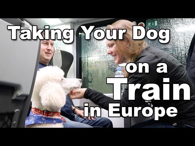 Taking Your Dog on a Train in Europe