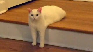 Repeat youtube video Funny CATS guaranteed to make you laugh - Funny cat compilation