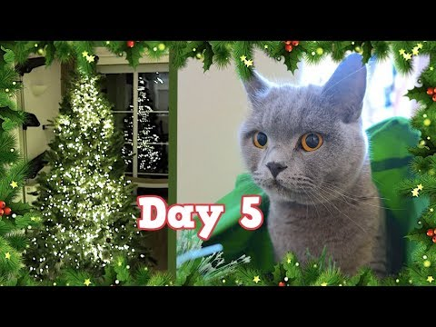 CAT SCARED OF CHRISTMAS TREES! | VLOGMAS DAY 5 - CHRIS & EVE