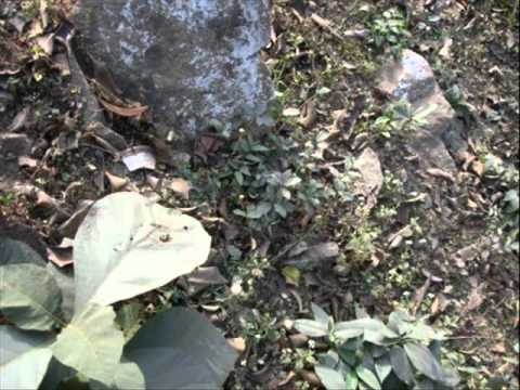 Impact of Industrial Pollution on Biodiversity in Chhattisgarh. Part-1