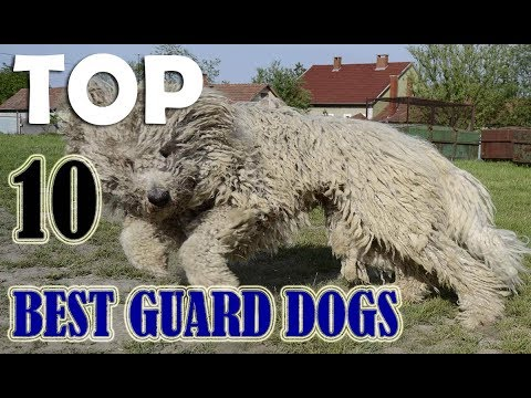 TOP 10 BEST GUARD DOGS 2018
