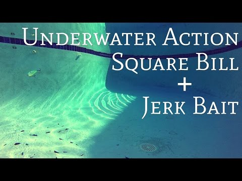 Fishing Tips - Underwater Square Bill and Jerk Bait Action