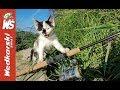 FOX Polska - YouTube