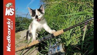 Duże brzany i mały kotek, który przepłynął San