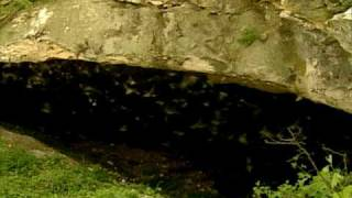 Bat Caves of Texas - Texas Parks and Wildlife [Official]